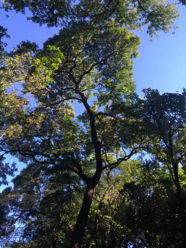 Jardin Botanico Trees